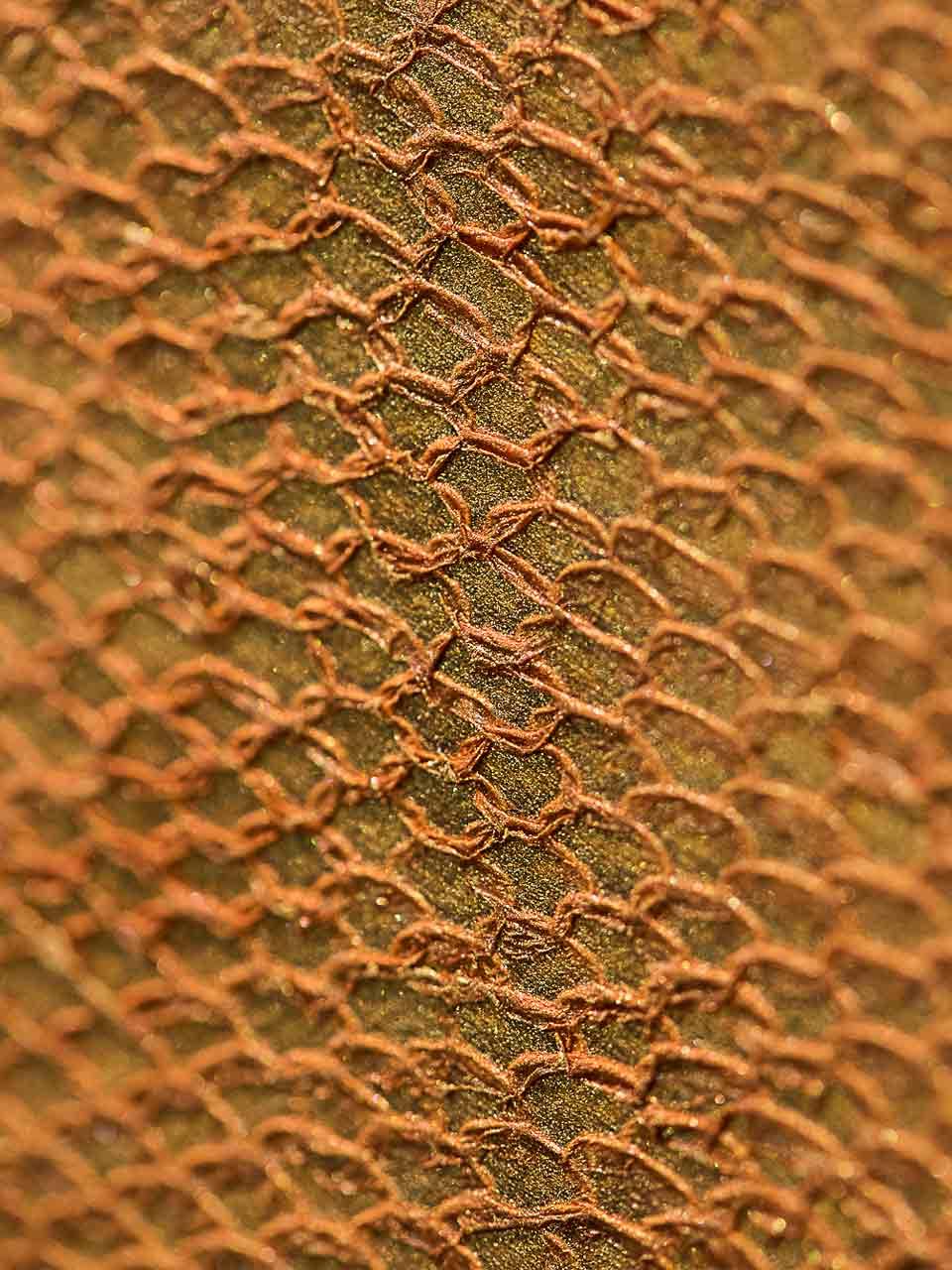 Pantuna® est la marque déposée du premier cuir de thon