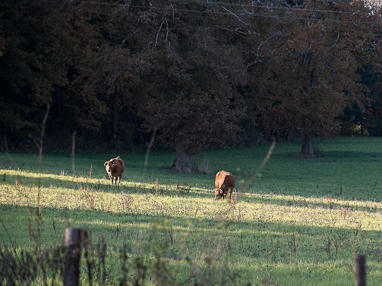 Livre blanc RSE Filière Française Cuir vache