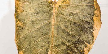 Tissu BeLeaf teinte automne, finition mate, breveté par la tannerie brésilienne Nova Kaeru Steiff Schulte a imaginé un tissu de fibres de papier pour palier à la pénurie de matière premières après la guerre mondiale qu'elle a depuis réédité - Photo © Corinne Jamet.