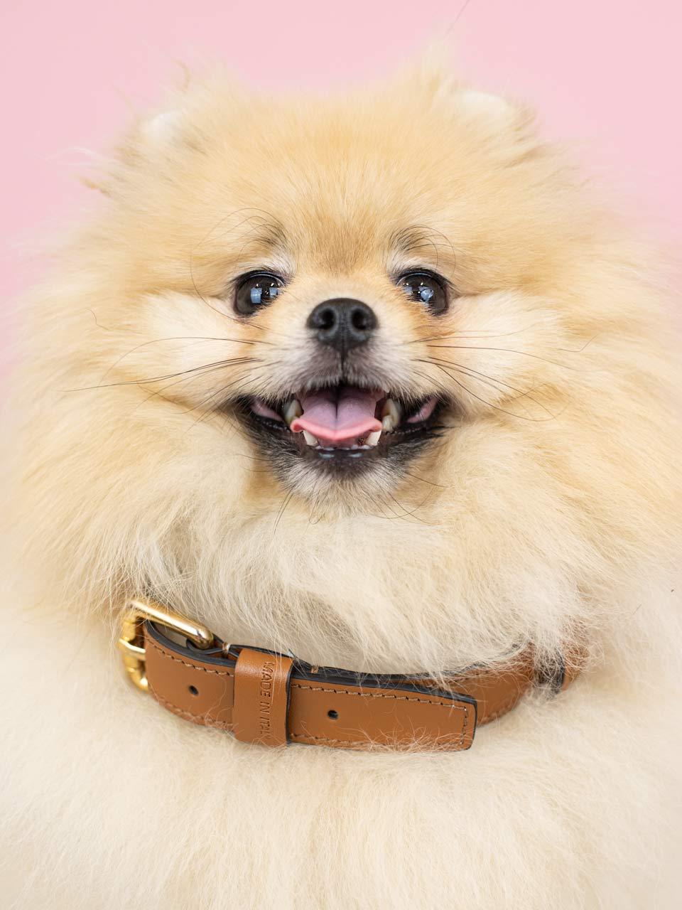 astre collier ledog cognac chien